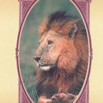 Tarot de la sagesse animale